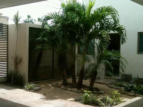 Coco plumoso for Jardines con palmeras